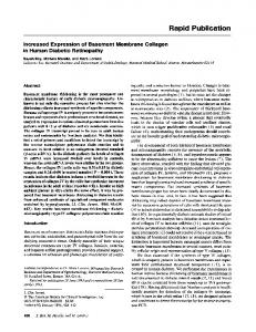 Increased expression of basement membrane collagen in human