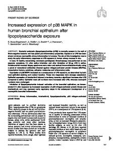 Increased expression of p38 MAPK in human bronchial ... - CiteSeerX