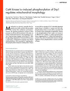 induced phosphorylation of Drp1 regulates mitochondrial morphology