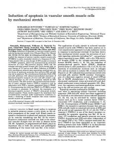 Induction of apoptosis in vascular smooth muscle cells by mechanical ...