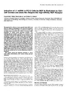 Induction of Ll mRNA in PC12 Cells by NGF Is Modulated by Cell-Cell ...