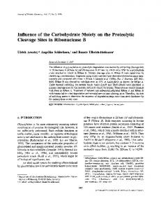 Influence of the Carbohydrate Moiety on the Proteolytic ... - Springer Link