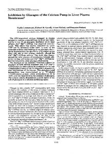 Inhibition by Glucagon of the Calcium Pump in Liver Plasma Membranes