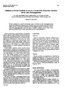 Inhibition of Protein Synthesis in vitro by Lectin from Momordica ...