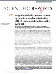 Insight into the fission mechanism by quantitative