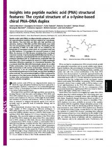 Insights into peptide nucleic acid (PNA) structural