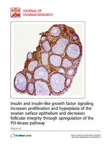 Insulin and insulin-like growth factor signaling increases proliferation ...