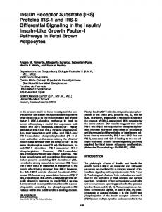 Insulin Receptor Substrate (IRS) Proteins IRS-1 and IRS-2 Differential ...