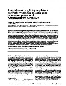Integration of a splicing regulatory network within the meiotic gene ...