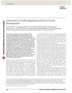 Interaction of reelin signaling and Lis1 in brain development - Nature