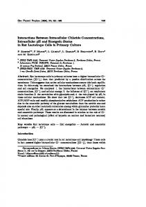 Interactions Between Intracellular Chloride Concentrations ...