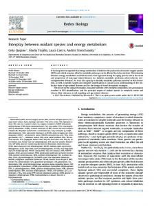 Interplay between oxidant species and energy metabolism - Core