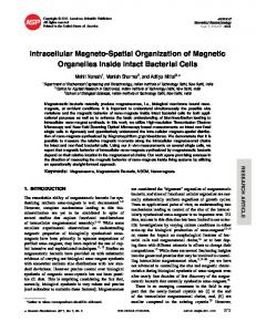 Intracellular Magneto-Spatial Organization of ... - Semantic Scholar