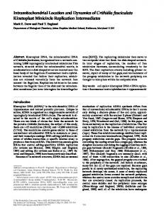 Intramitochondrial Location and Dynamics of Crithidia ... - BioMedSearch