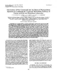 Introduction of New Carotenoids into the Bacterial Photosynthetic ...