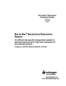 Invitrogen Bac to Bac Expression System