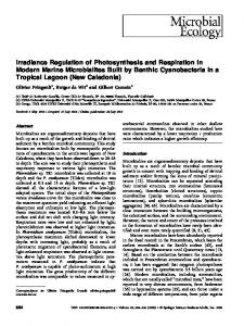 Irradiance Regulation of Photosynthesis and Respiration in Modern