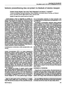 Ischemic preconditioning does not protect via blockade of electron ...