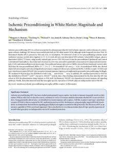 Ischemic Preconditioning in White Matter - Journal of Neuroscience