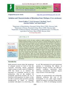 Isolation and Characterization of Rhizobium from Chickpea ... - IJCMAS