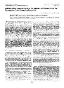 Isolation and Characterization of the Human Chromosomal Gene for ...
