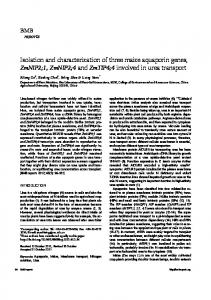 Isolation and characterization of three maize
