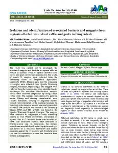 Isolation and identification of associated bacteria and maggots from ...