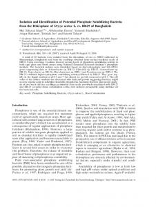 Isolation and Identification of Potential Phosphate Solubilizing ...