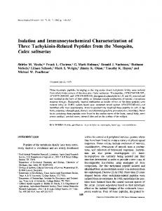 Isolation and Immunocytochemical Characterization of ... - Springer Link
