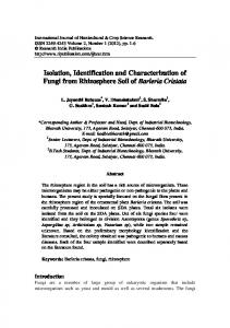 Isolation, Identification and Characterization of Fungi ...