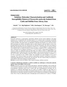 Isolation, Molecular Characterization and Antibiotic ...