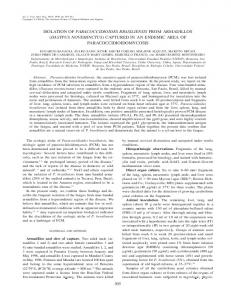 isolation of paracoccidioides brasiliensis from