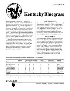 Kentucky Bluegrass - Forages