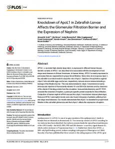 Knockdown of ApoL1 in Zebrafish Larvae Affects the ... - OPUS 4