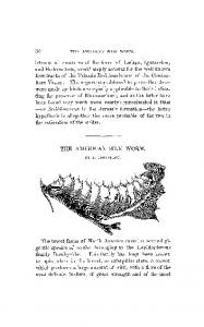 (L. Trouvelot(1867) The American Silk Worm. American Naturalist ...