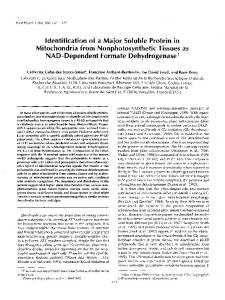 ldentification of a Maior Soluble Protein in Mitochondria from ... - NCBI
