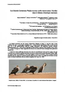 Les Grands Cormorans Phalacrocorax carbo ...