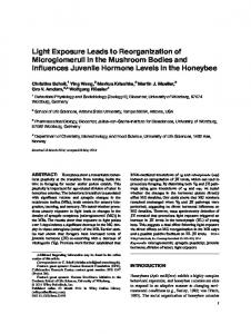 Light exposure leads to reorganization of ... - Wiley Online Library