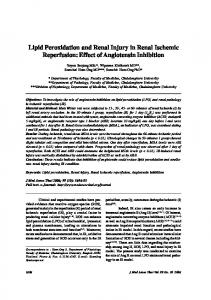 Lipid Peroxidation and Renal Injury in Renal Ischemic ... - ThaiScience