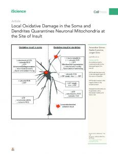 Local Oxidative Damage in the Soma and Dendrites ... - Cell Press