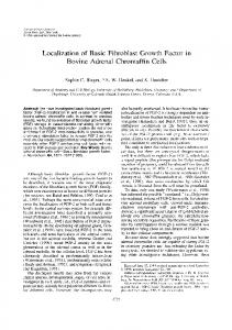 Localization of Basic Fibroblast Growth Factor in ... - Wiley Online Library