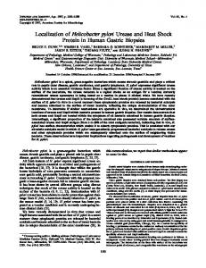 Localization of Helicobacter pylori Urease and Heat Shock Protein in ...