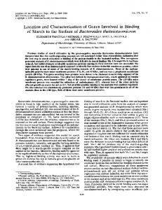 Location and Characterization of Genes Involved in Binding of Starch ...