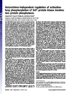 loop phosphorylation of Snf1 protein kinase ... - Semantic Scholar
