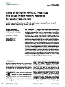 Lung endothelial ADAM17 regulates the acute ... - Wiley Online Library