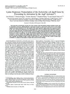 Lysine Represses Transcription of the Escherichia coli dapB Gene by ...