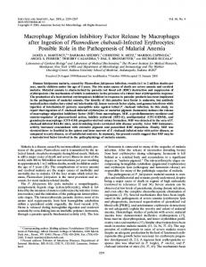 Macrophage Migration Inhibitory Factor Release by Macrophages