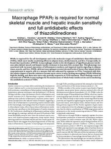 Macrophage PPARγ is required for normal skeletal muscle and ...