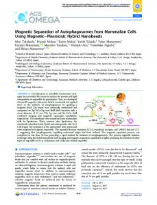 Magnetic Separation of Autophagosomes from ... - ACS Publications