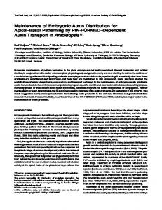 Maintenance of Embryonic Auxin Distribution for Apical ... - CiteSeerX